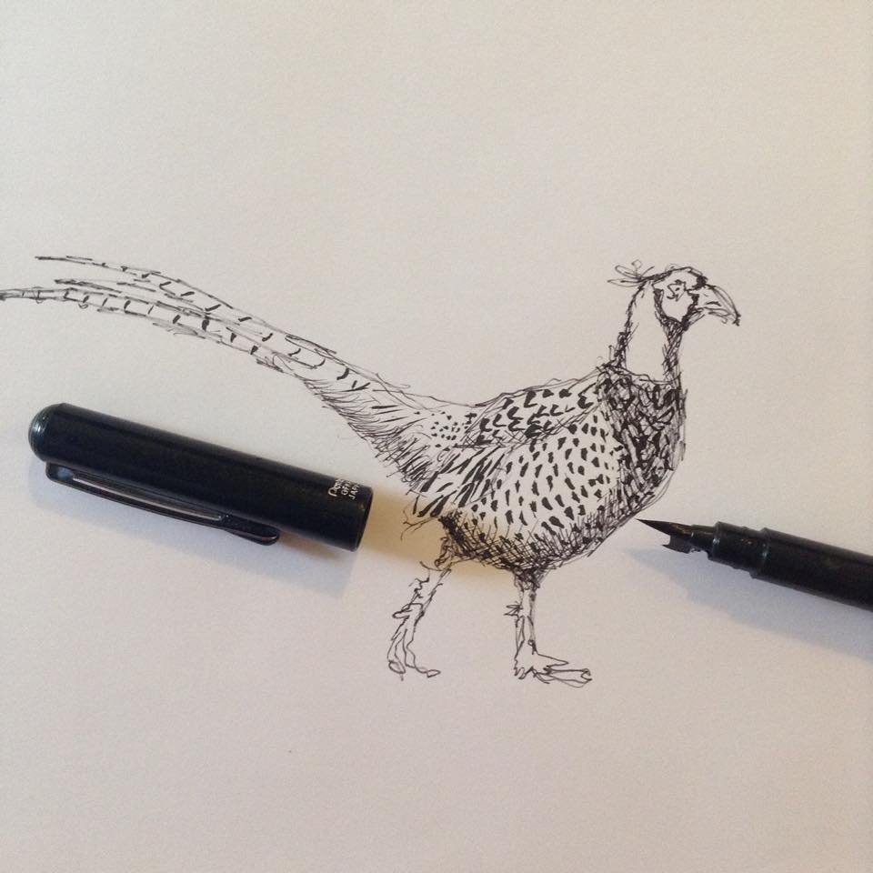 Pheasant sketch for commission (2014)